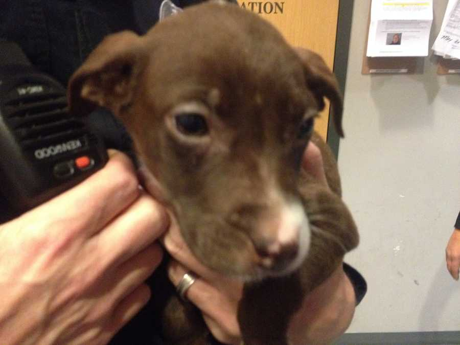 A puppy that was stolen from the Animal Rescue League earlier this week has been returned after a Homestead police officer tracked down the dog and the two women accused of taking her.