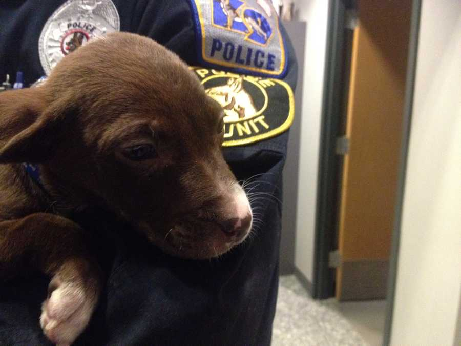 """""""They had sent somebody with the dog to the police station right before my arrival. I actually caught up to the male down the street, took custody of the puppy,"""" said Ilgenfritz."""