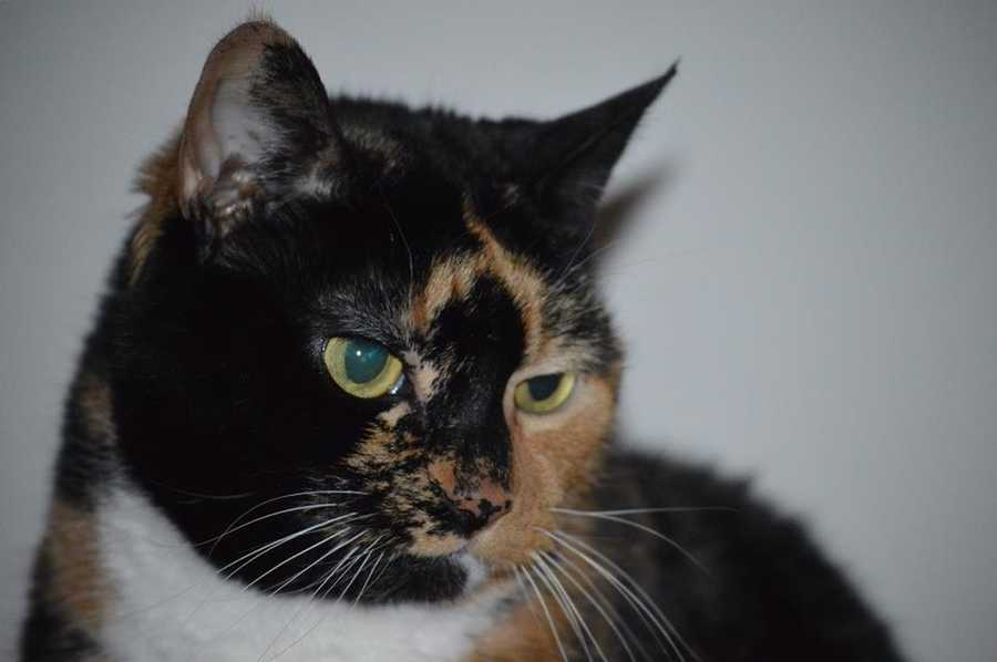Producer Connie Stewart's cat Bella.