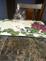 Meteorologist Ray Petelin's cat Bokey who is always hungry.