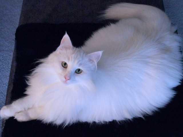 Reporter Bob Mayo's cat Chloe.