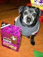 Photographer John McKee's dog Doug.