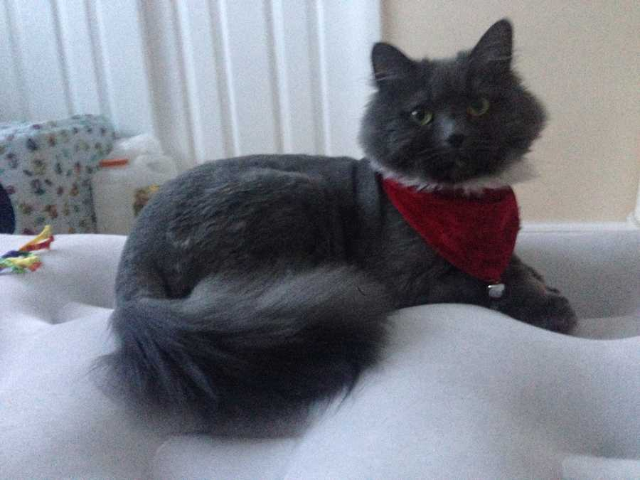 Social Media Producer Amanda Jupena's cat Gia.