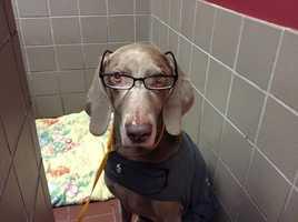 Executive Producer Michael LaFlesh's dog Jake.