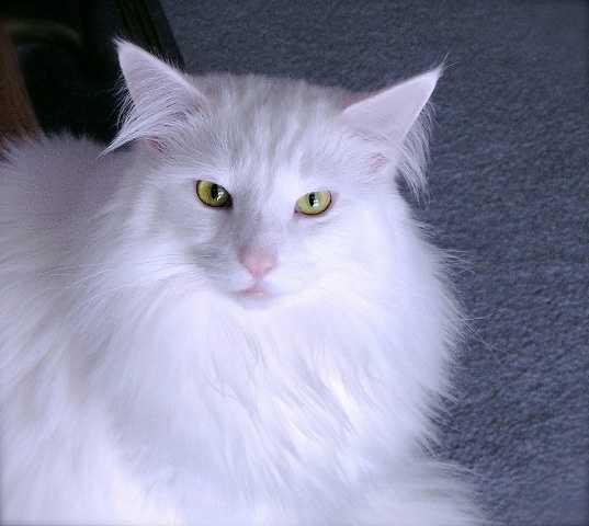 Reporter Bob Mayo's cat Jamie.