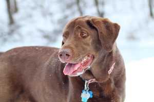 Meteorologist Ray Petelin's dog Lucy.