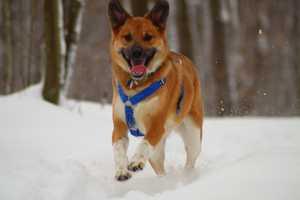 Meteorologist Ray Petelin's dog Roxi.