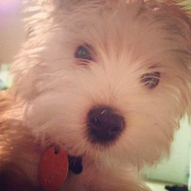 Producer Mary Davies's dog Teddy.