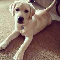 Anchor Mike Clark's dog Bailey.