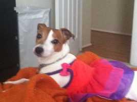 Client Service Specialist Tara Bente's dog Bella.