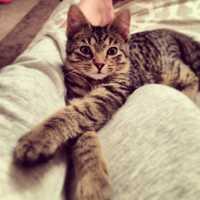 Digital Client Specialist Maggie Nagle's cat Harry Winston.