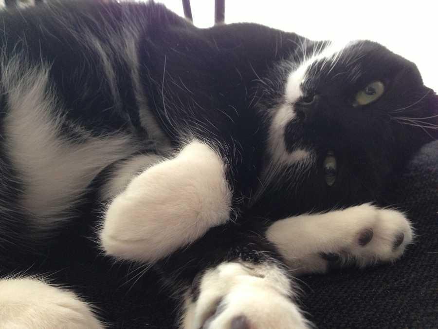 Producer Jamie Bittner's cat Audrey.