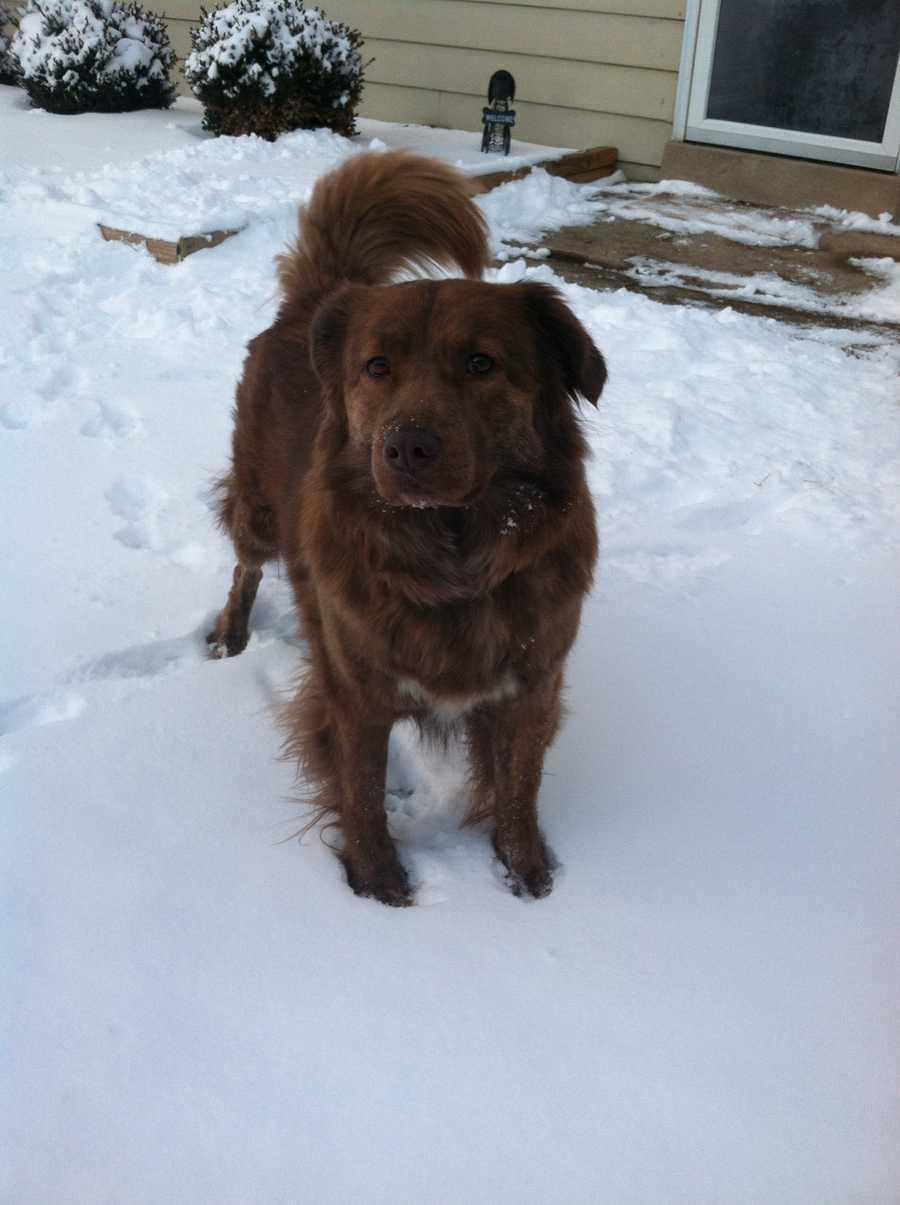 Meteorologist Ashley Dougherty's dog Bubba Luke.