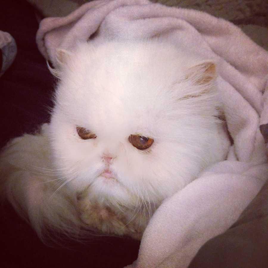 Meteorologist Ashley Dougherty's cat Bella Marie.