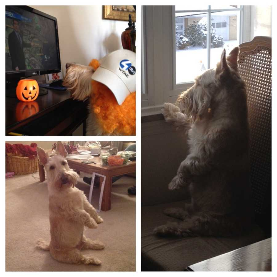 Producer Andrea Russell's Scottish Terrier Baxter