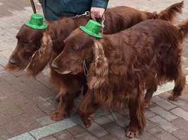 One of the country's largest St. Patrick's Day parades was held Saturday morning in downtown Pittsburgh.