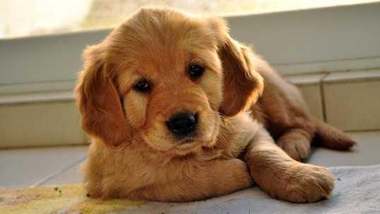 Puppy 14 IMG