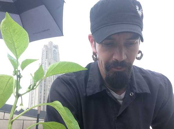 "The executive chef, Kevin Hermann, says people are always surprised at what's happening on the roof of the restaurant. ""They say, 'I had no idea,' when I tell them I have two blueberry bushes, a strawberry patch, beehives,"" Hermann said."