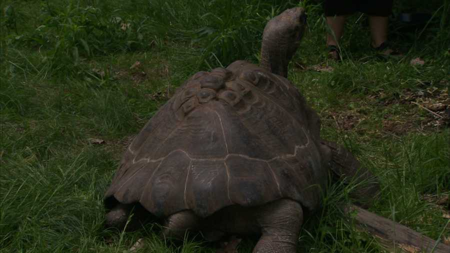 The Pittsburgh Zoo & PPG Aquarium's newest residents came out of their shells for visitors on Thursday.