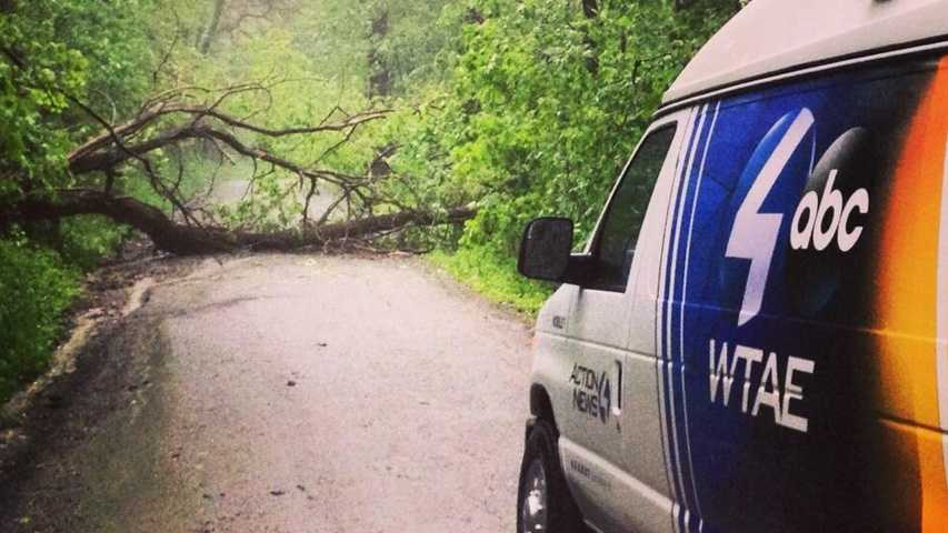 A Pittsburgh's Action News 4 crew encounters a large tree blocking Kings Road in Houston, Washington County