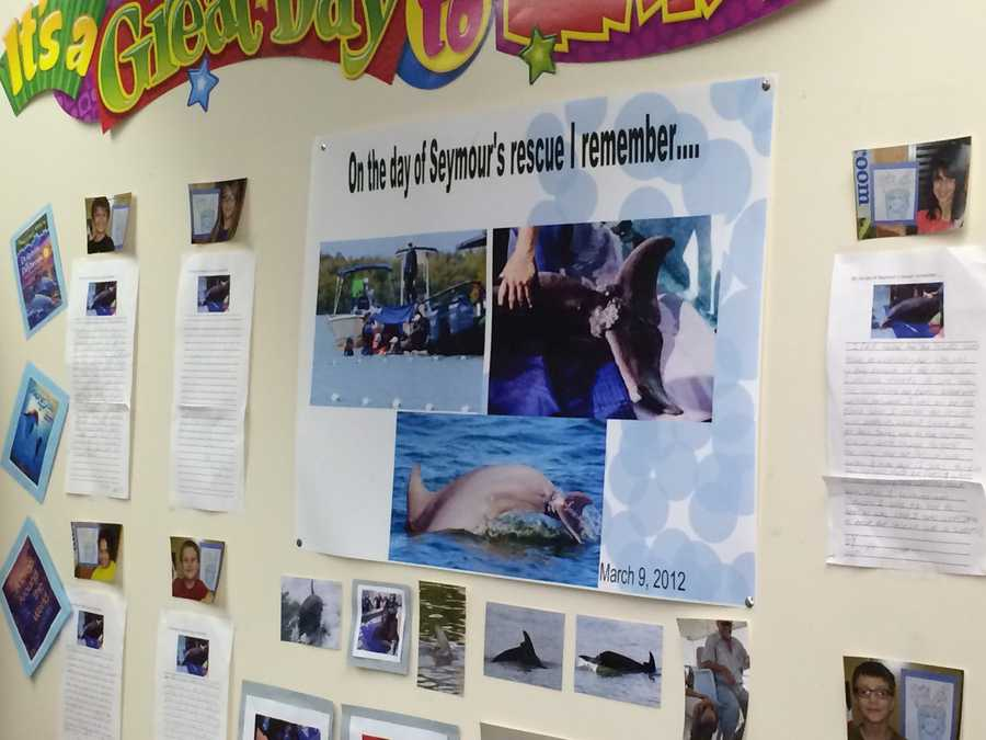 The children of Crafton Elementary jumped into action to raise funds for a rescue. The students raised $1,200 that went toward an expensive and risky rescue that saved the life of the dolphin.