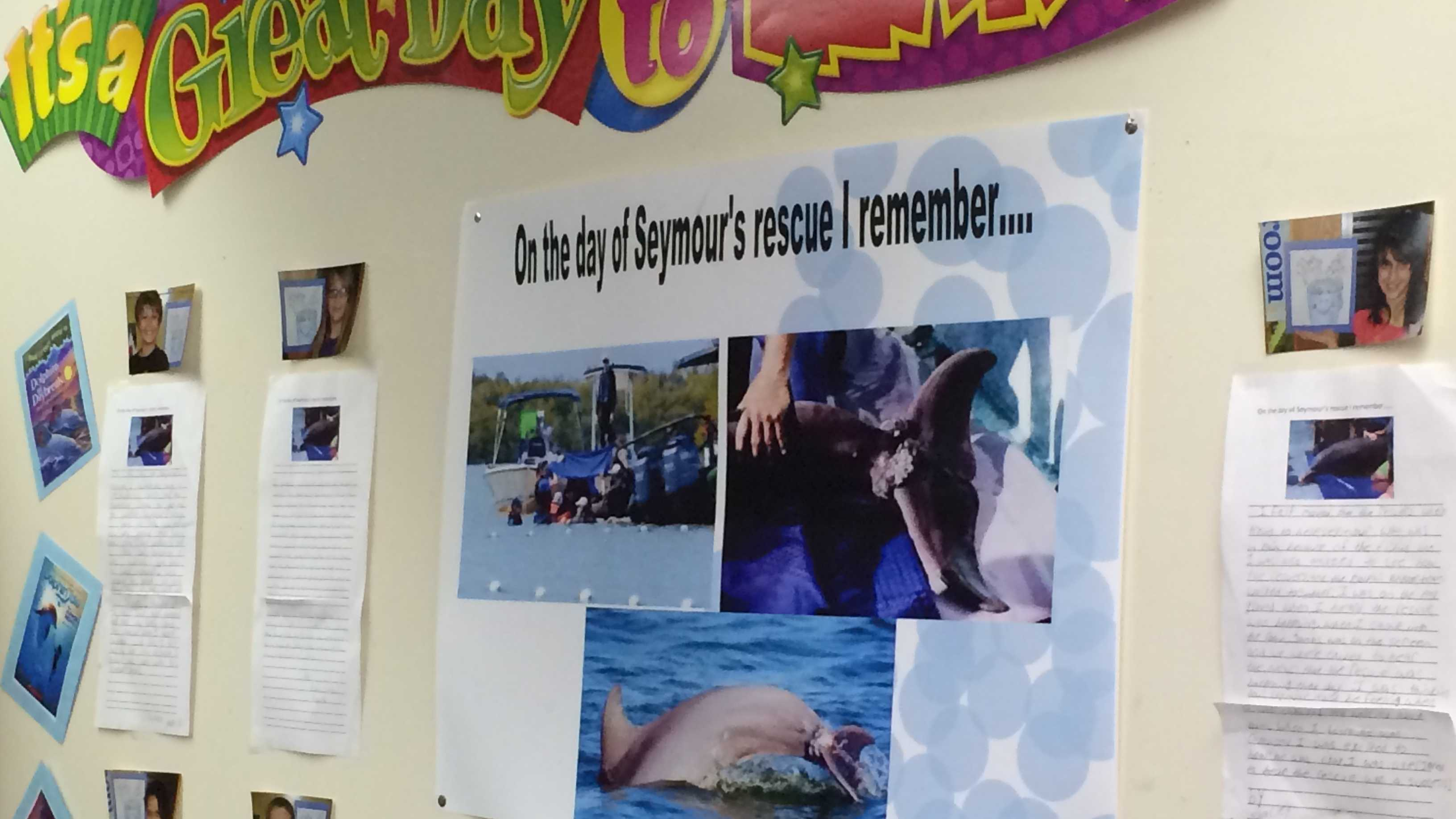 img-Crafton Elementary students save dolphin