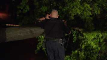 A tree fell on Academy Avenue in Sewickley during the thunderstorm.