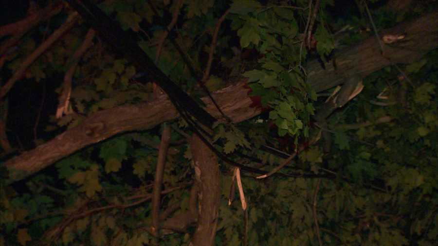 The tree took wires down when it fell on Abers Creek Road, causing power outages for residents in the area of Route 22.