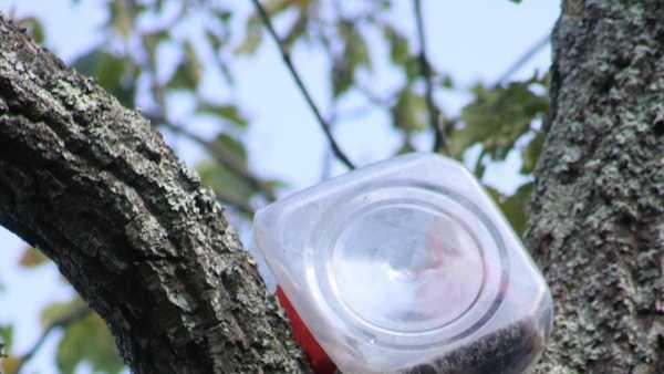 Cub stuck in jar