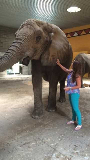 African elephants have the largest ear flaps -- and the skin on the ear is very smooth!