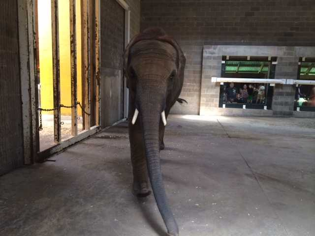 Meet Angeline! She's Savanna's baby and weighs 3,500 pounds.