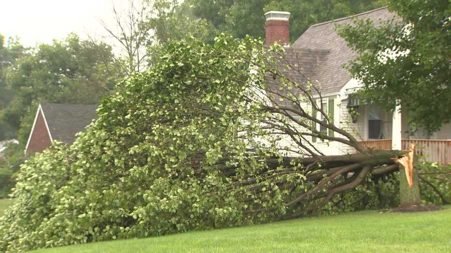 A tee fell in the yard of a house in Pleasant Hills.
