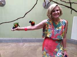 Guests had the opportunity to get up close with the colorful Lorikeets as they fed them cups of nectar.