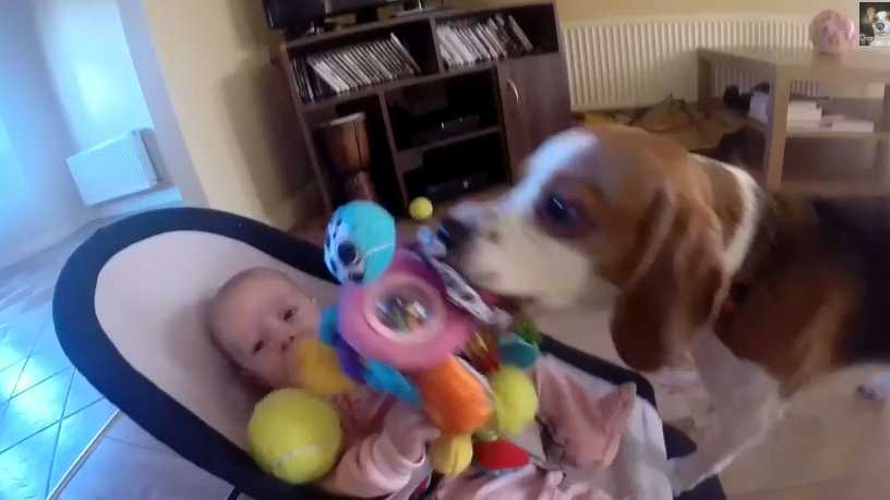 Cute Dog and Begal TV IMG