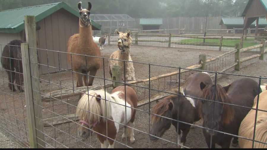 No animals were harmed in the fire at Living Treasures Wild Animal Park.