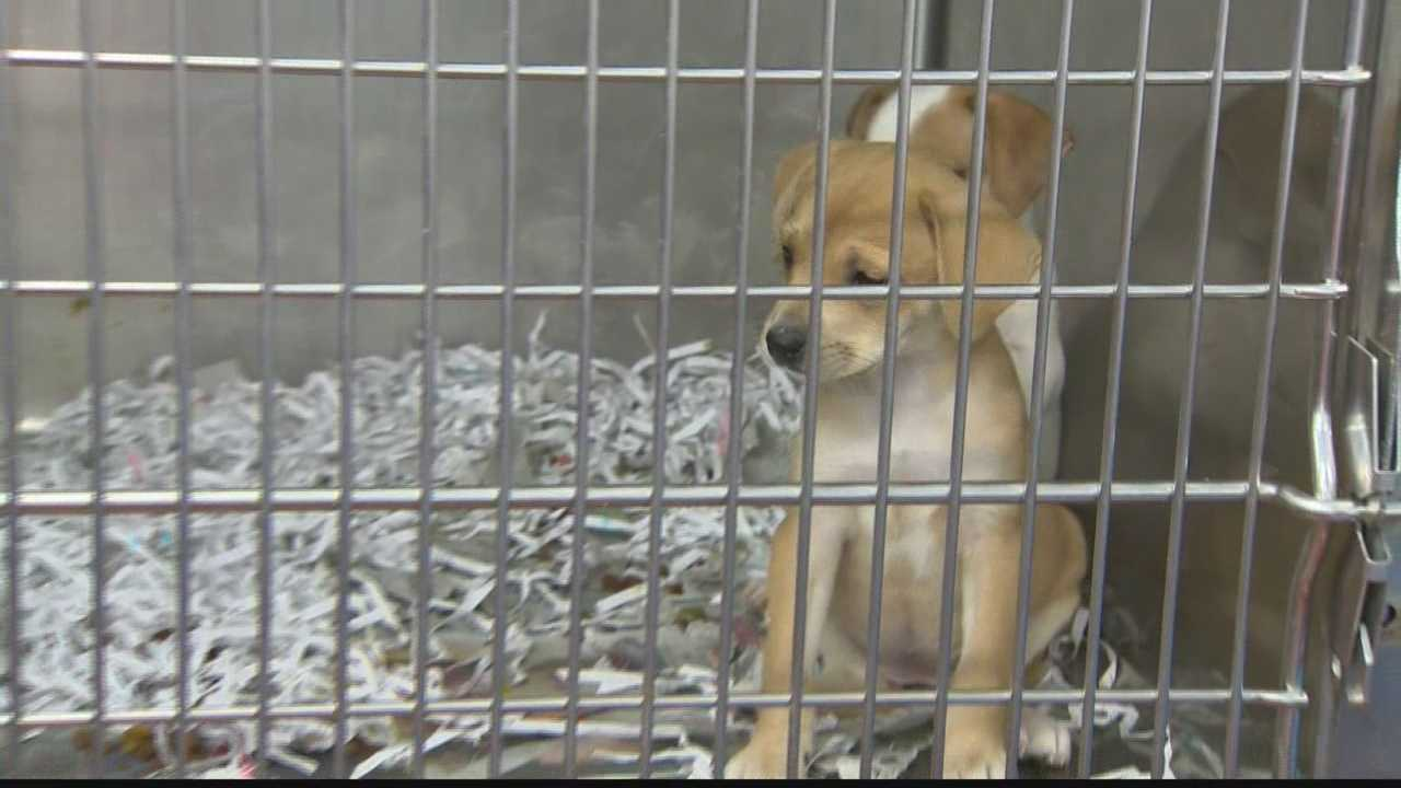 img-dog in cage