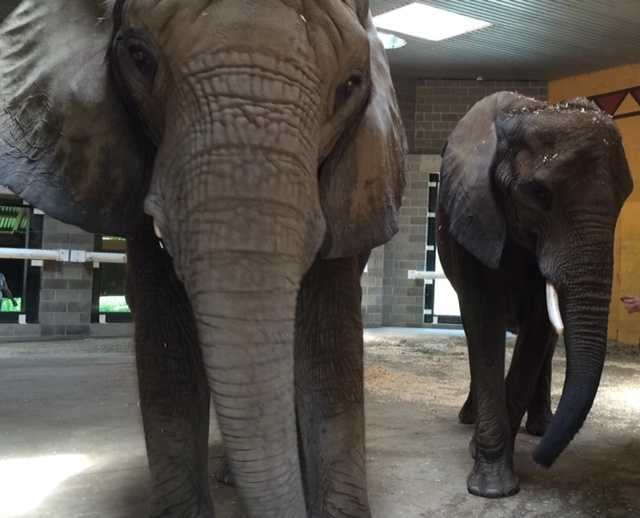 Meet Savanna (on the right). She's 6,800 pounds.