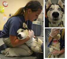 The dog underwent emergency treatment at the Pittsburgh Veterinary Specialty & Emergency Center in Ohio Township.