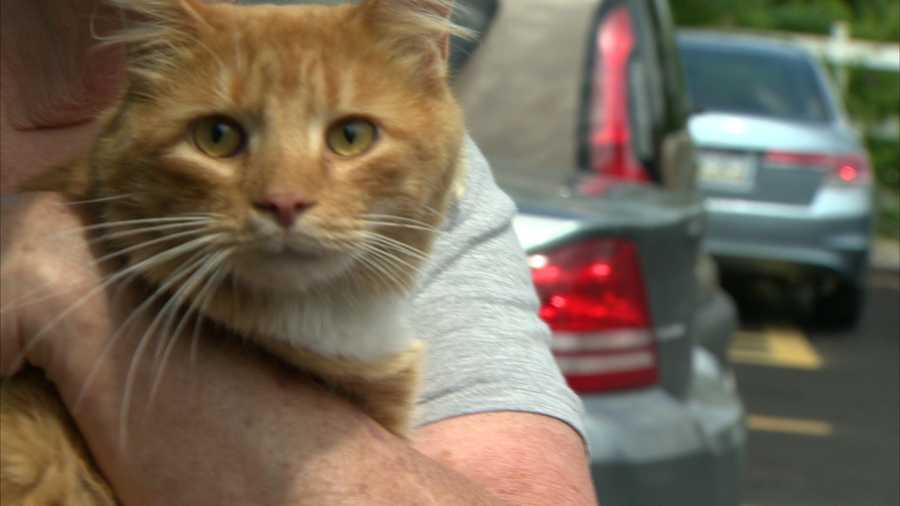 Judy Silvis says her cat, appropriately named Garfield for his orange coloring, is very friendly, making it even more infuriating that someone would want to harm him, let alone shoot him with an arrow.