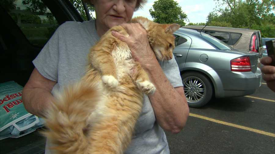 """He's a very lovable cat and I couldn't see why anybody would hurt him,"" she said as tears welled in her eyes."