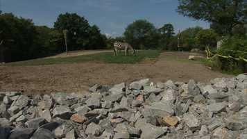 Two new zebras are on display at the Pittsburgh Zoo & PPG Aquarium.