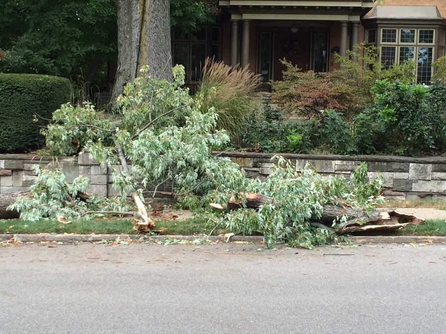 The woman, who is in her 60s, was walking to her friend's house when the tree branch fell.