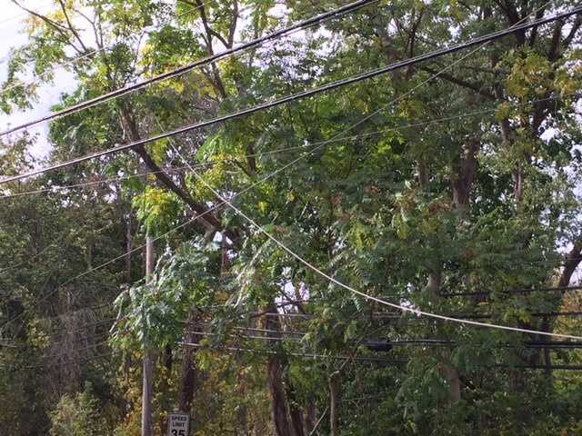 Strong winds knocked down a tree and power lines on Dorseyville Road in Fox Chapel.