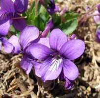 Violet/Purple: Authority – Power