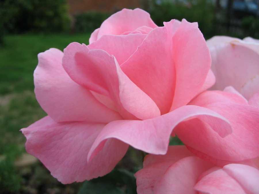 Pink: Sophistication – Sincerity