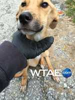 The female German Shepherd mix was found by a trash collector outside a home on Yellow Pine Lane in New Stanton.