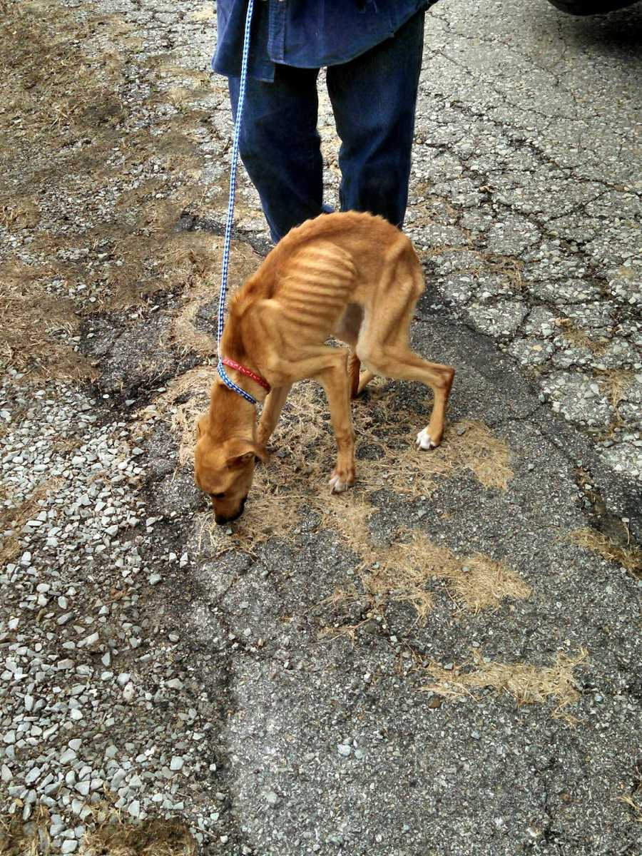 """The dog is really emaciated. It's hard to say you've ever seen anything much skinnier,"" said Jan Dillon, an agent with the Humane Society of Westmoreland County."
