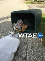 """This is how a trash collector in New Stanton found a dog being described as """"skin and bones."""""""