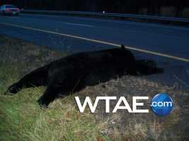 The driver, identified as 37-year-old Sherri Henry, was taken to a hospital after hitting the bear.