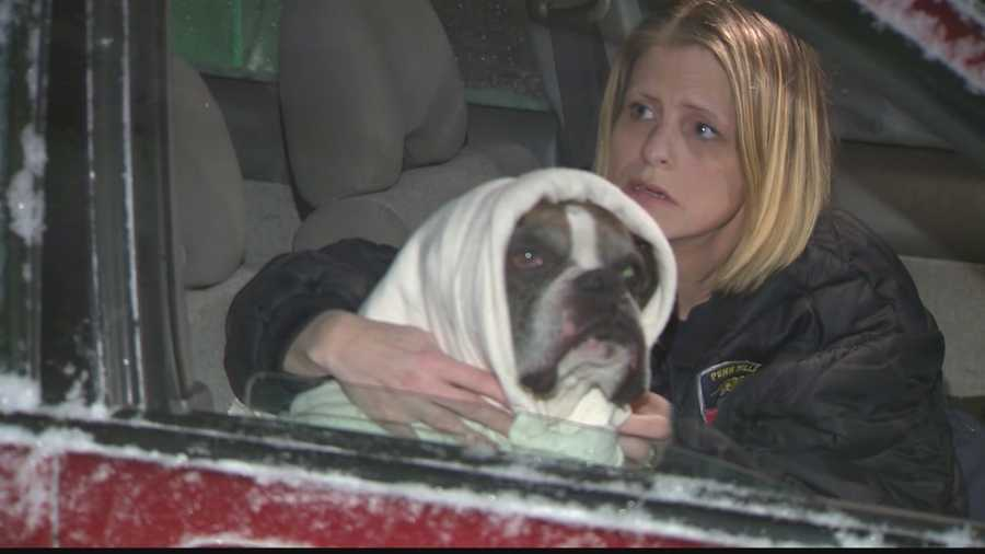 After a giant social media search, Maximus, the dog spotted running on the Parkway East, has been found after 5 days.